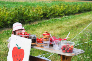 Strawberry Picking-1-5