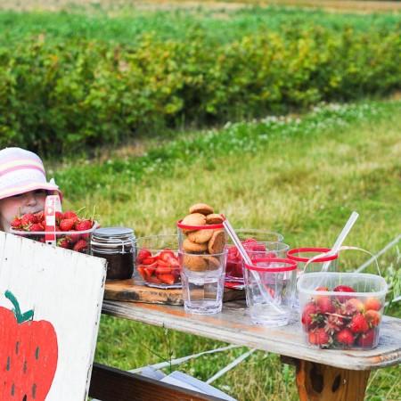 Strawberry Picking-1-5