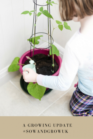 Seed Sowing – a growing update with innocent and GIY for Sow & Grow UK